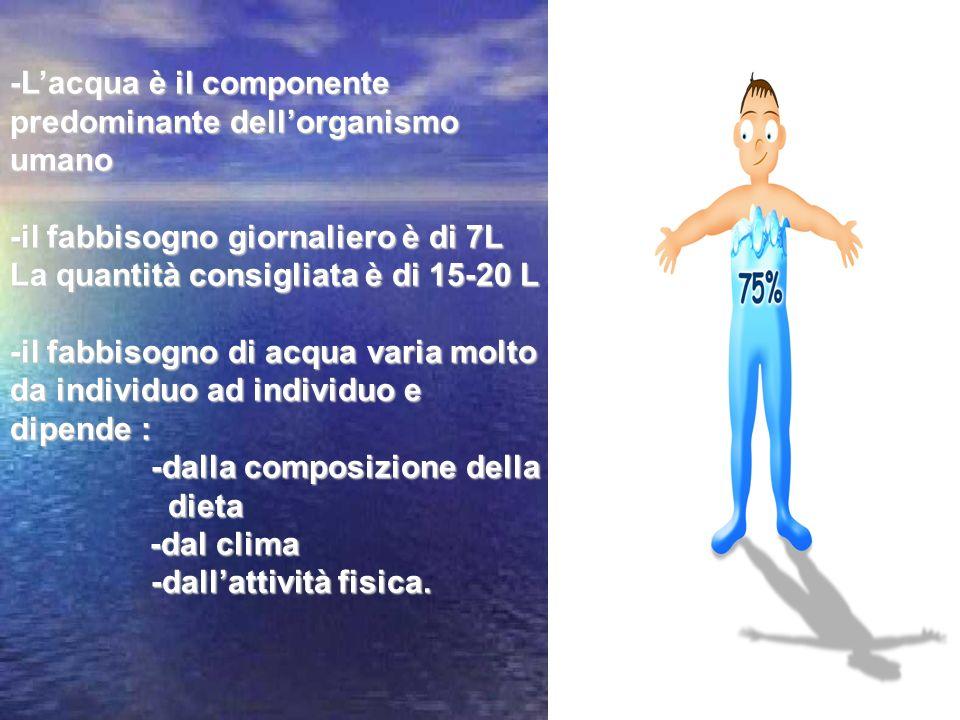 -L'acqua è il componente predominante dell'organismo umano
