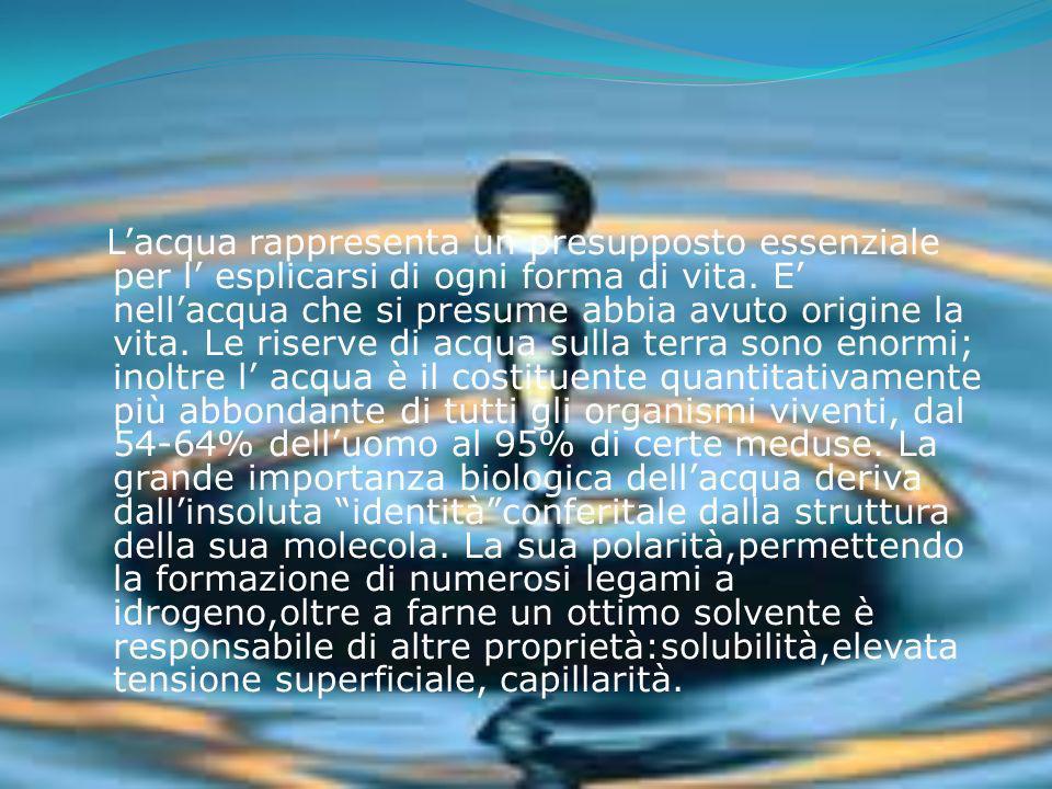 L'acqua rappresenta un presupposto essenziale per l' esplicarsi di ogni forma di vita.