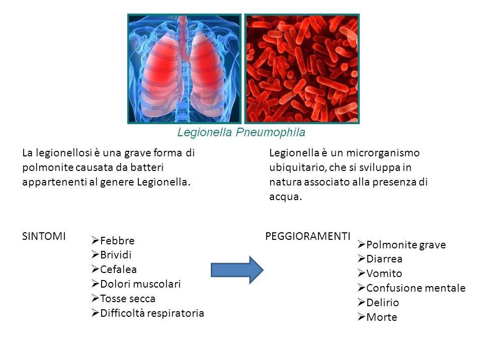 La legionellosi è una grave forma di polmonite causata da batteri appartenenti al genere Legionella.