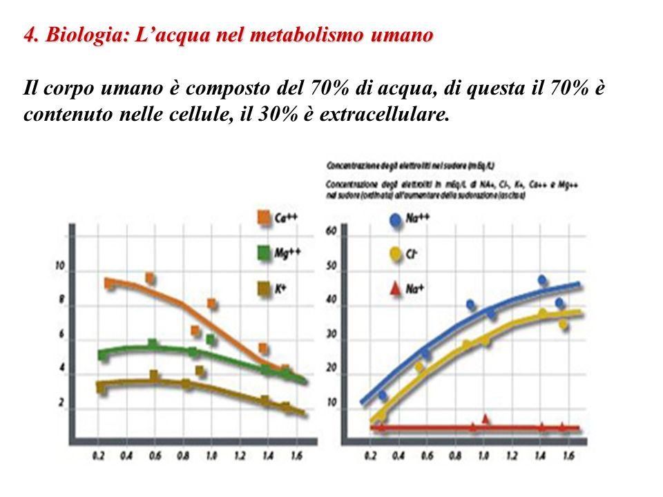 4. Biologia: L'acqua nel metabolismo umano