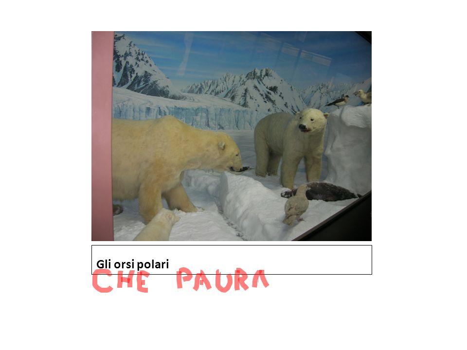 Gli orsi polari