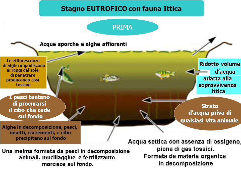 PRIMA Stagno EUTROFICO con fauna Ittica PRIMA