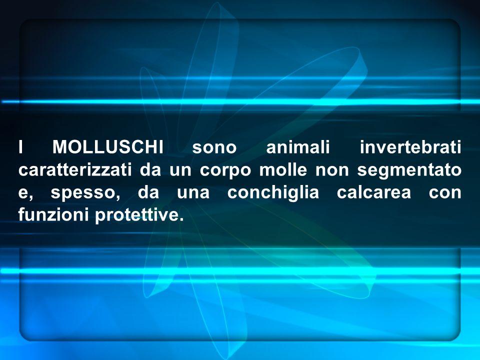 I MOLLUSCHI sono animali invertebrati caratterizzati da un corpo molle non segmentato e, spesso, da una conchiglia calcarea con funzioni protettive.