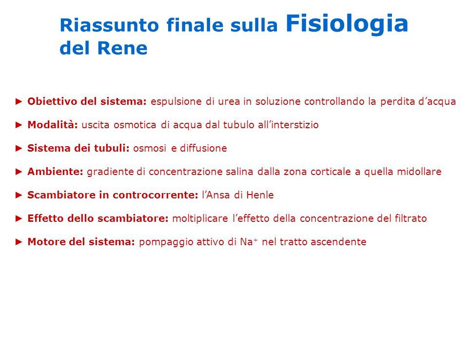 Riassunto finale sulla Fisiologia del Rene