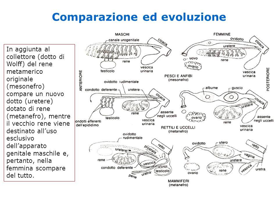 Comparazione ed evoluzione