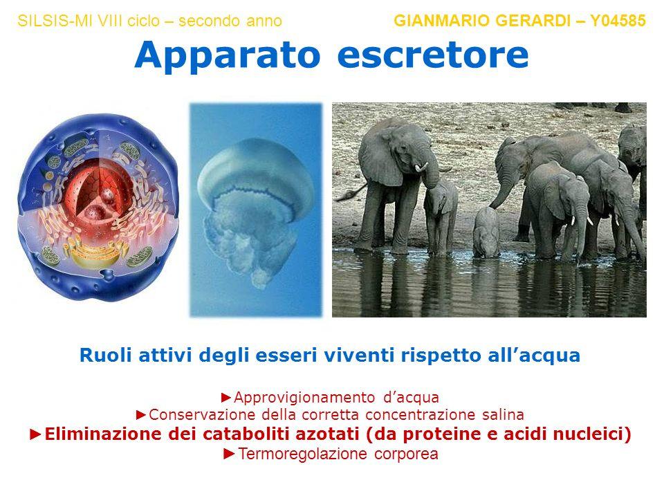 Ruoli attivi degli esseri viventi rispetto all'acqua