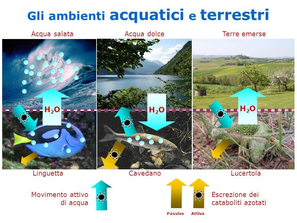 Gli ambienti acquatici e terrestri