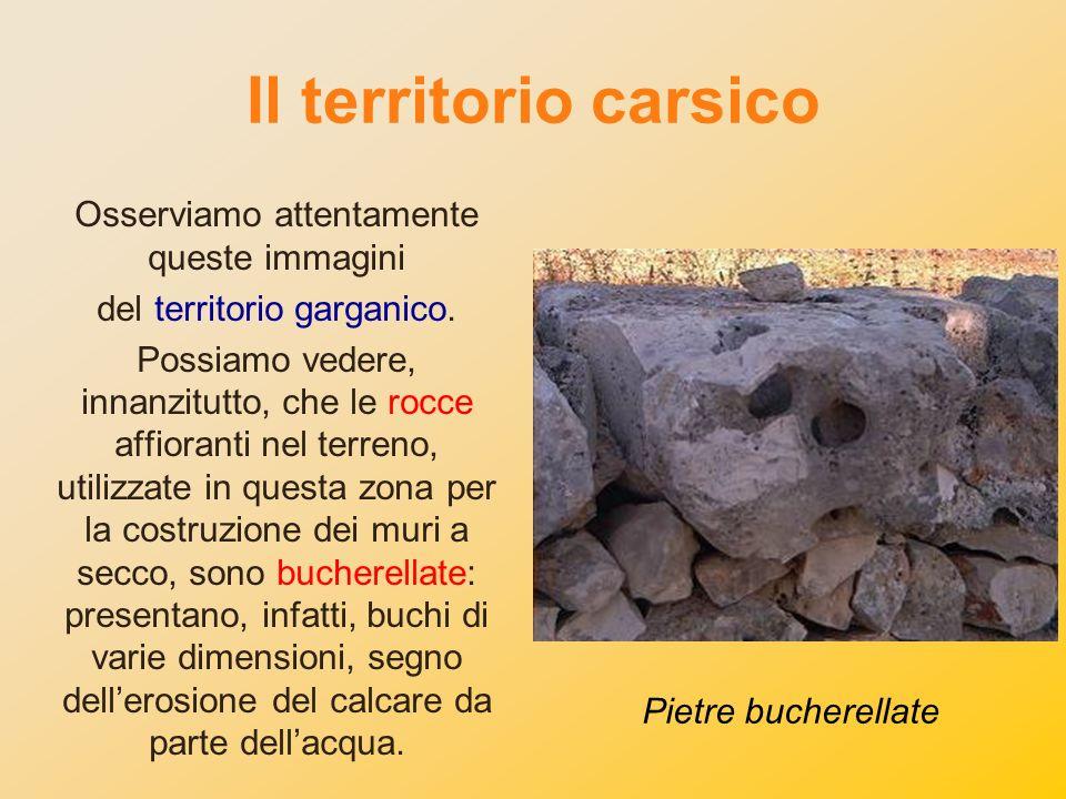 Il territorio carsico Osserviamo attentamente queste immagini