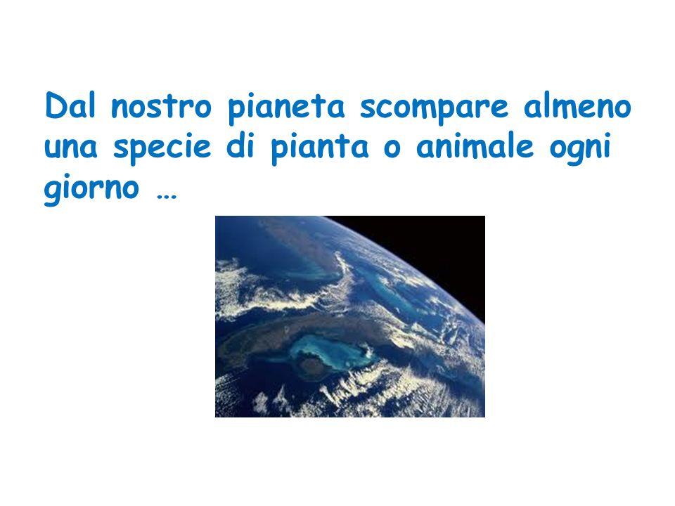 Dal nostro pianeta scompare almeno una specie di pianta o animale ogni giorno …