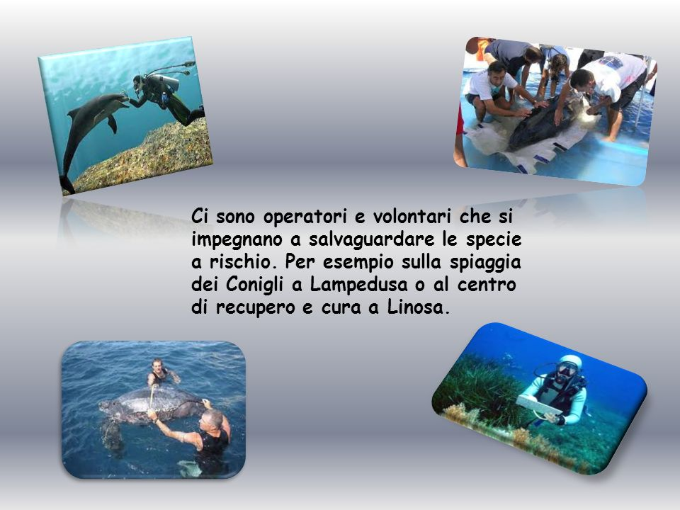 Ci sono operatori e volontari che si impegnano a salvaguardare le specie a rischio.