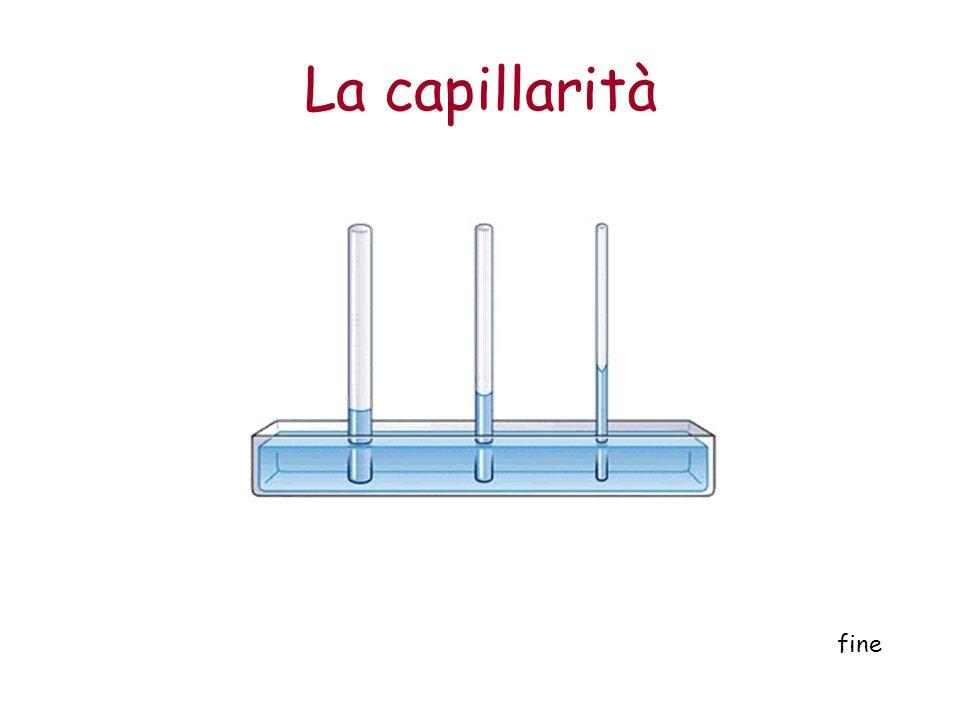 La capillarità fine