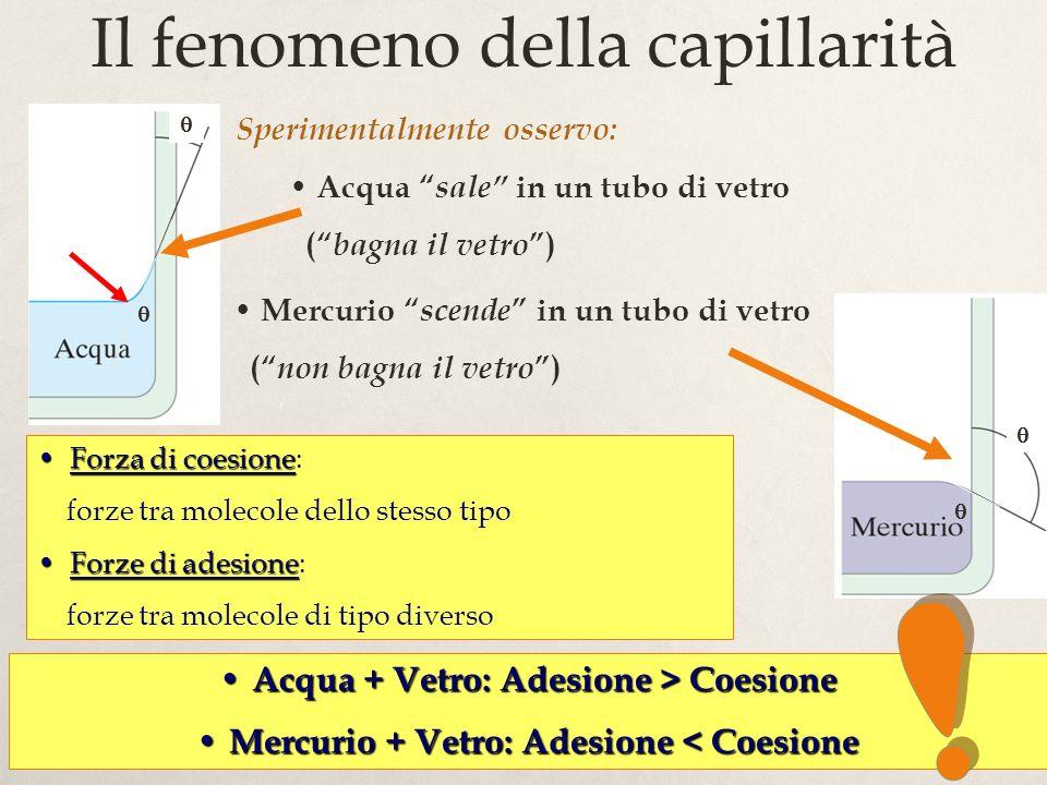 Il fenomeno della capillarità