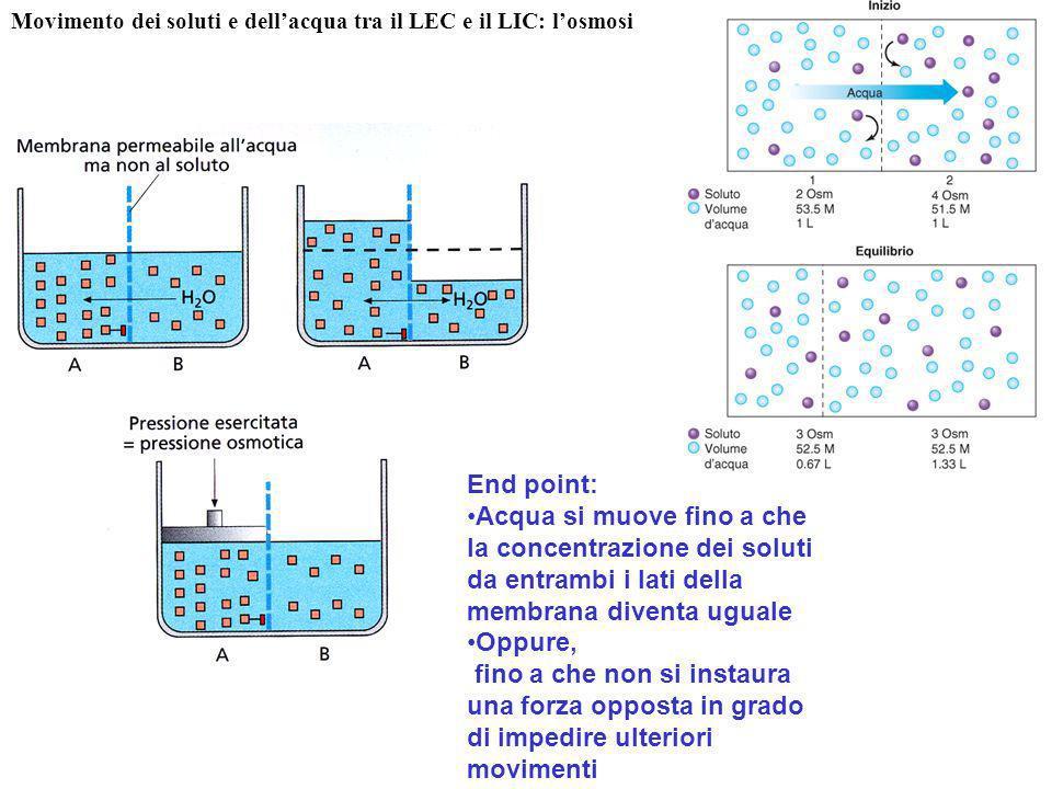 Movimento dei soluti e dell'acqua tra il LEC e il LIC: l'osmosi