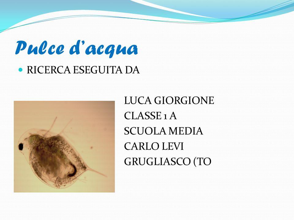 Pulce d'acqua RICERCA ESEGUITA DA LUCA GIORGIONE CLASSE 1 A