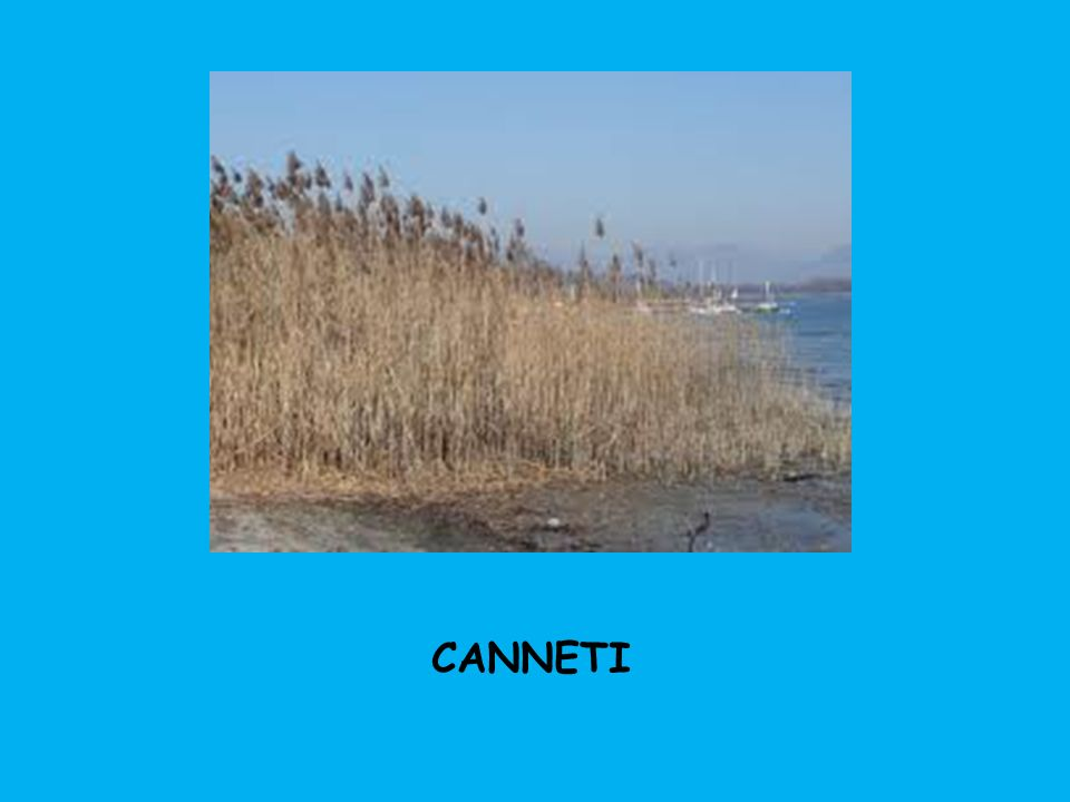 CANNETI