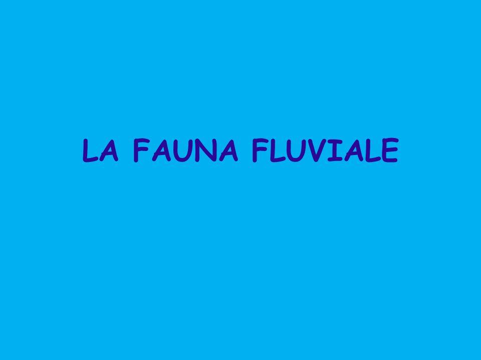 LA FAUNA FLUVIALE