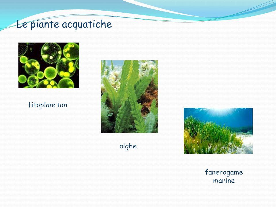 Le piante acquatiche fitoplancton alghe fanerogame marine