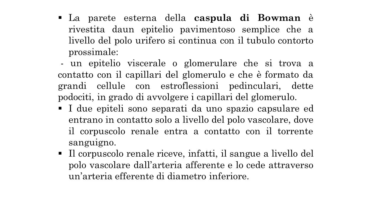 La parete esterna della caspula di Bowman è rivestita daun epitelio pavimentoso semplice che a livello del polo urifero si continua con il tubulo contorto prossimale: