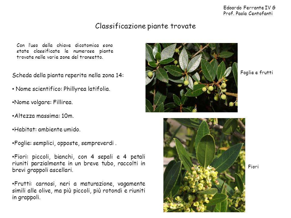 Classificazione piante trovate