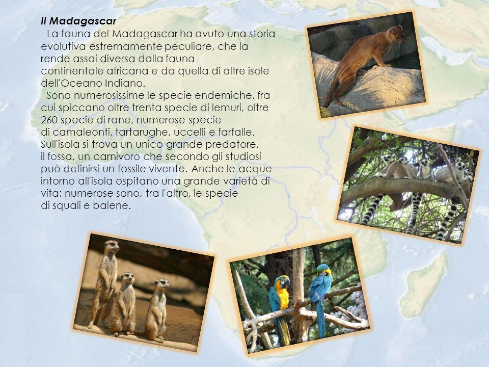 Il Madagascar