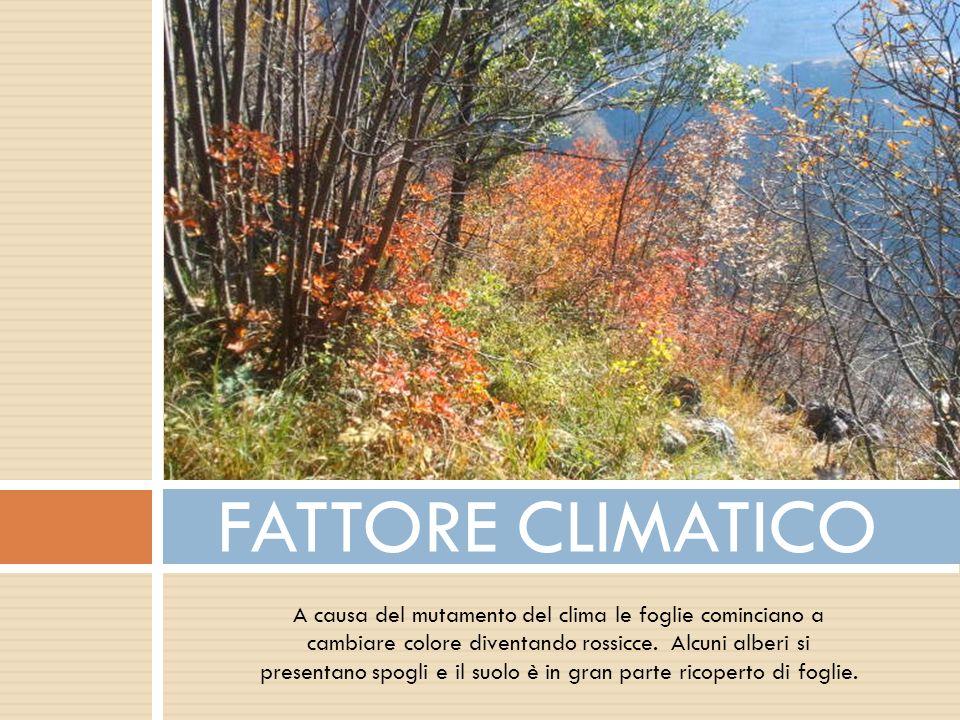 FATTORE CLIMATICO