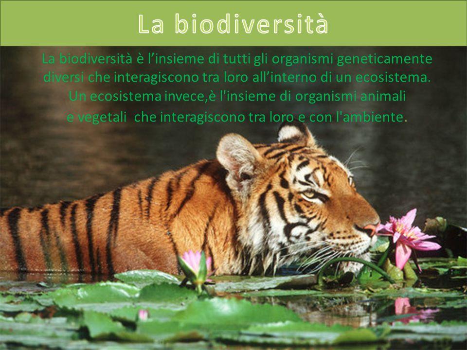 La biodiversità La biodiversità è l'insieme di tutti gli organismi geneticamente diversi che interagiscono tra loro all'interno di un ecosistema.
