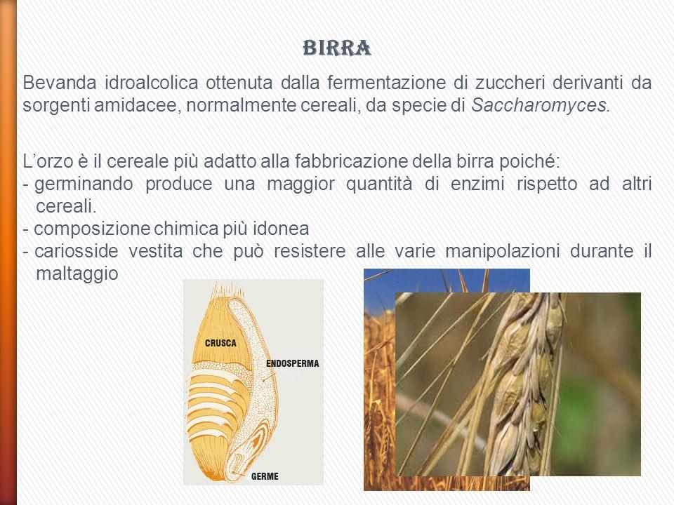 BIRRA Bevanda idroalcolica ottenuta dalla fermentazione di zuccheri derivanti da sorgenti amidacee, normalmente cereali, da specie di Saccharomyces.
