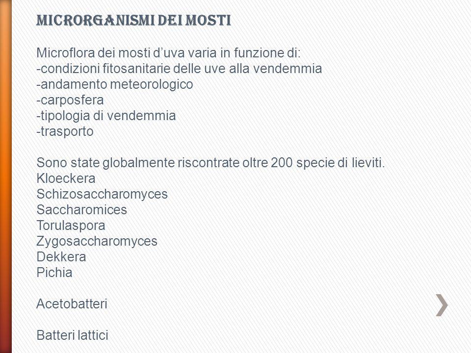 Microrganismi dei mosti
