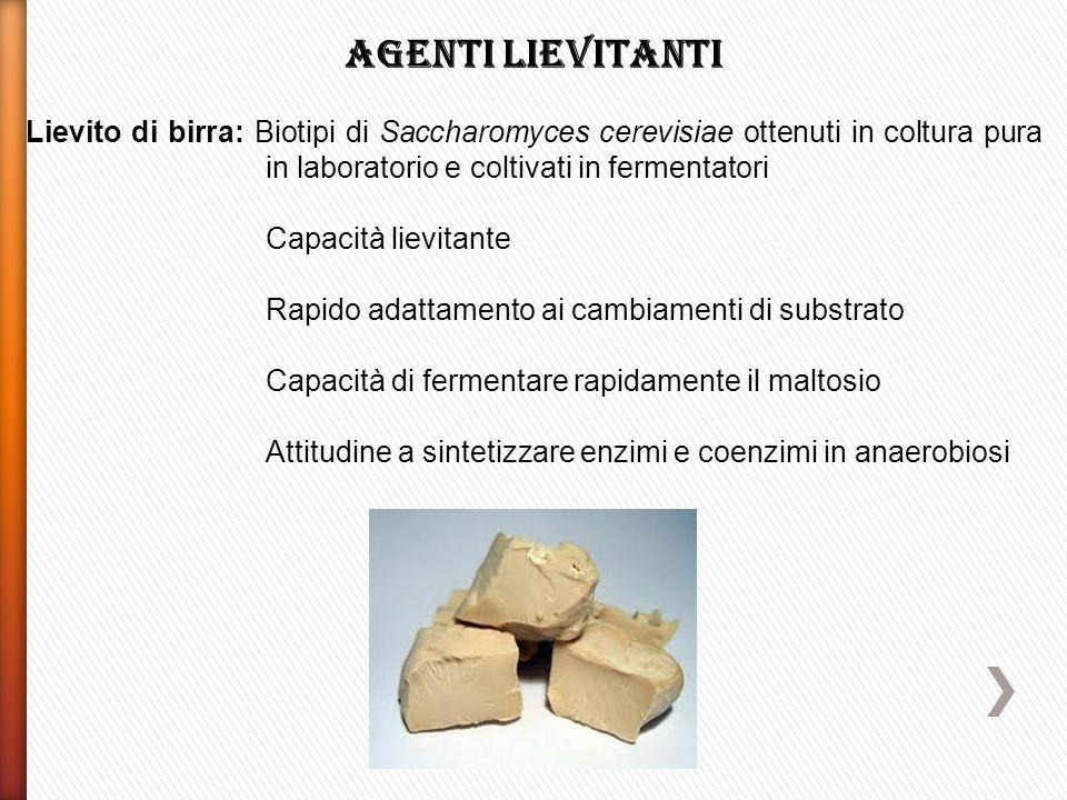 Agenti lievitanti Lievito di birra: Biotipi di Saccharomyces cerevisiae ottenuti in coltura pura in laboratorio e coltivati in fermentatori.