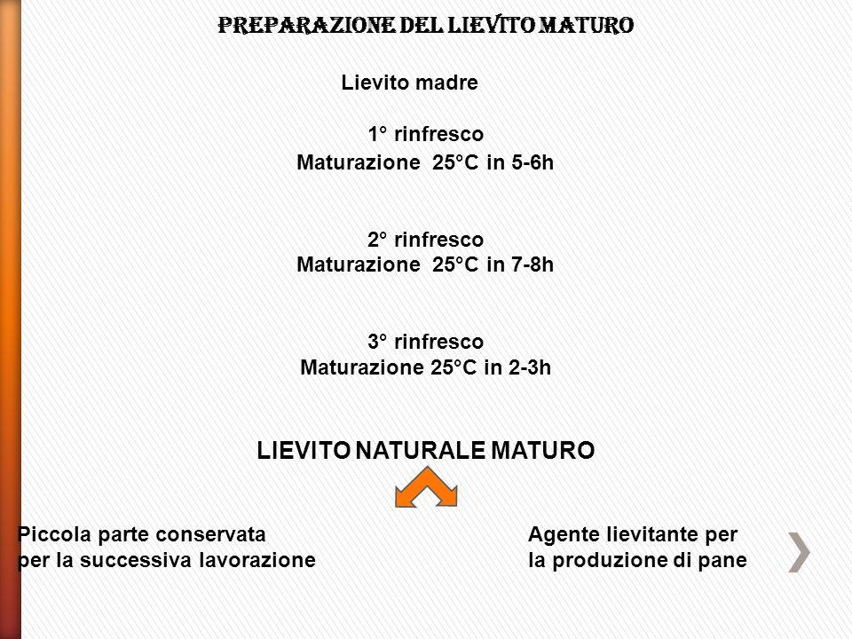 Preparazione del lievito maturo LIEVITO NATURALE MATURO