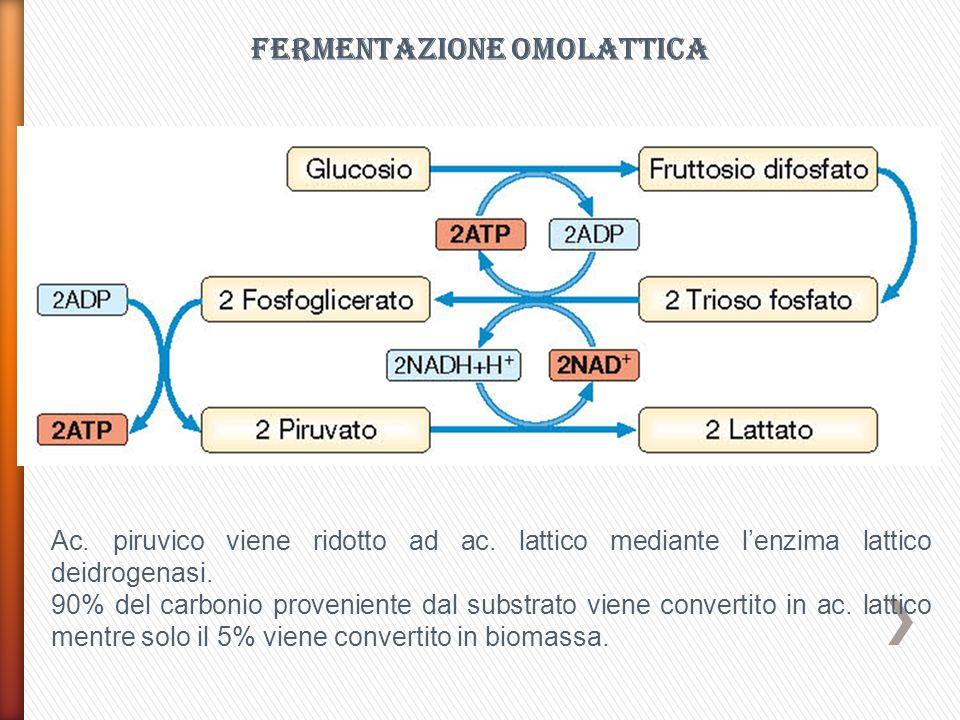 FERMENTAZIONE OMOLATTICA