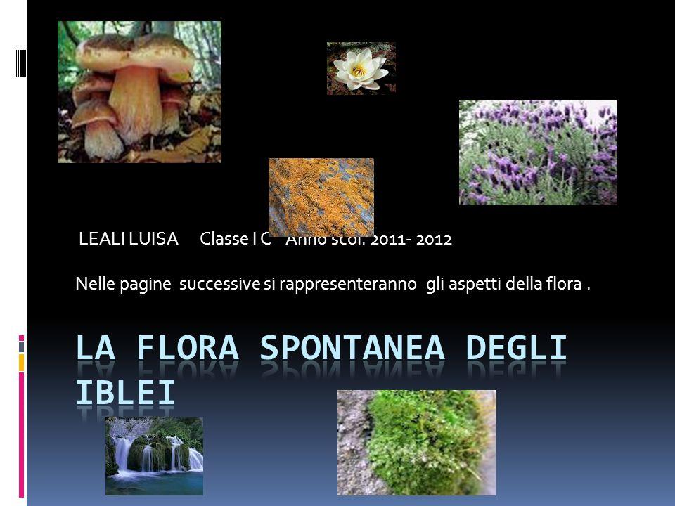 La flora spontanea degli iblei