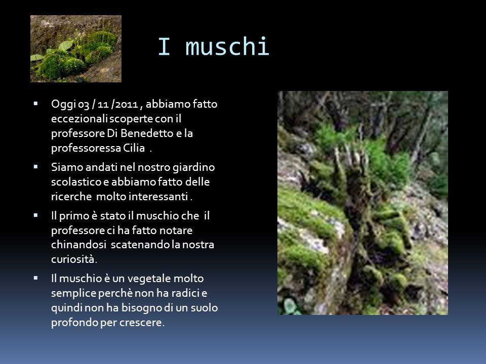 I muschi Oggi 03 / 11 /2011 , abbiamo fatto eccezionali scoperte con il professore Di Benedetto e la professoressa Cilia .