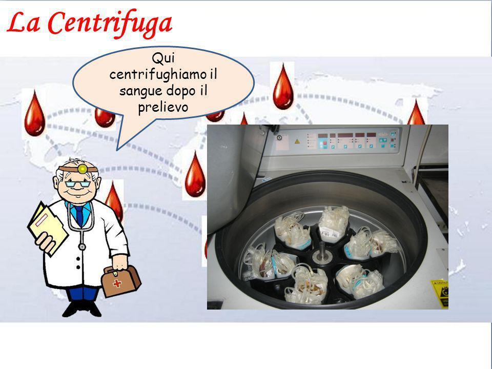 Qui centrifughiamo il sangue dopo il prelievo