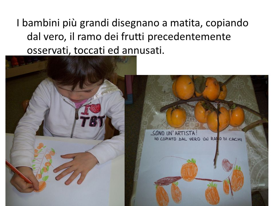I bambini più grandi disegnano a matita, copiando dal vero, il ramo dei frutti precedentemente osservati, toccati ed annusati.