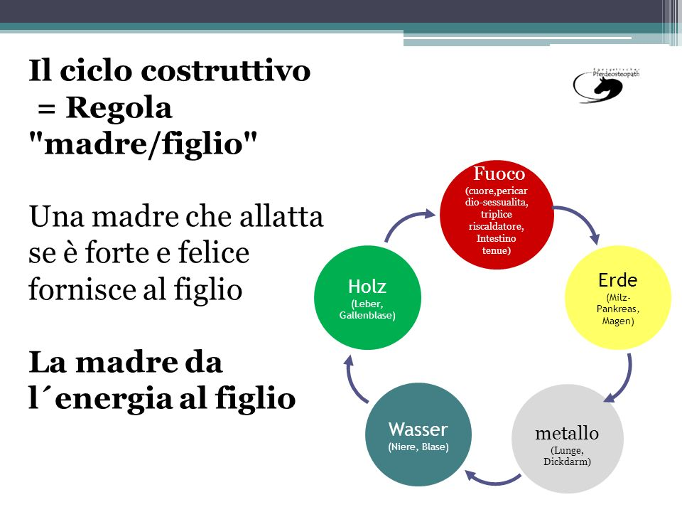 Il ciclo costruttivo = Regola madre/figlio Una madre che allatta