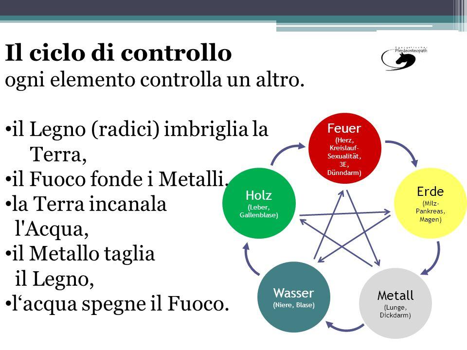 Il ciclo di controllo ogni elemento controlla un altro.