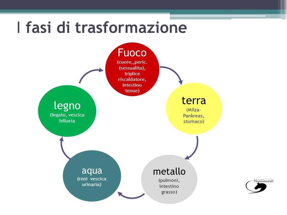 I fasi di trasformazione