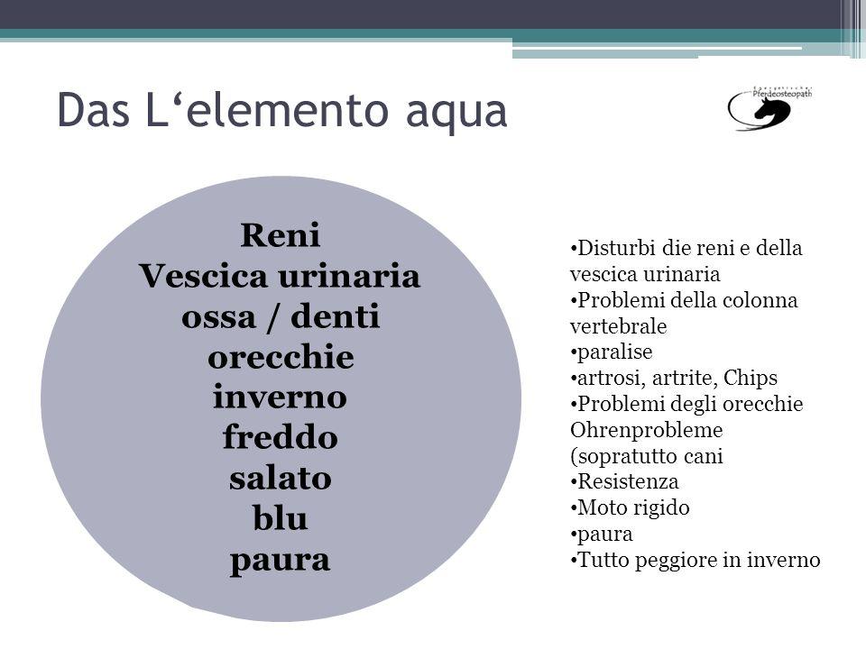Das L'elemento aqua Reni Vescica urinaria ossa / denti orecchie