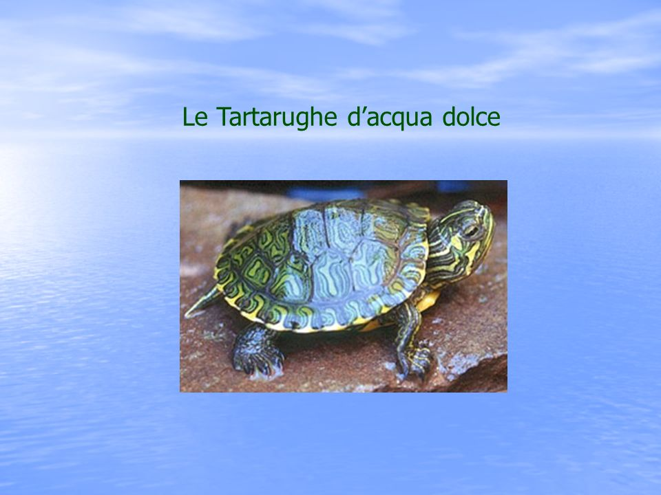 Le Tartarughe d'acqua dolce