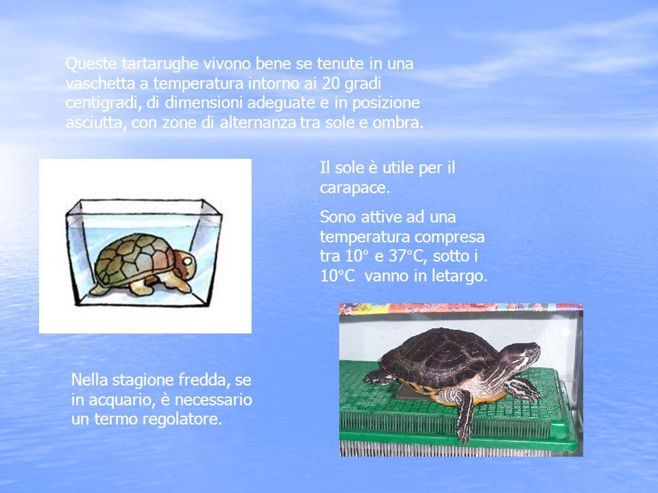 Le tartarughe d acqua dolce ppt scaricare for Letargo tartarughe acqua