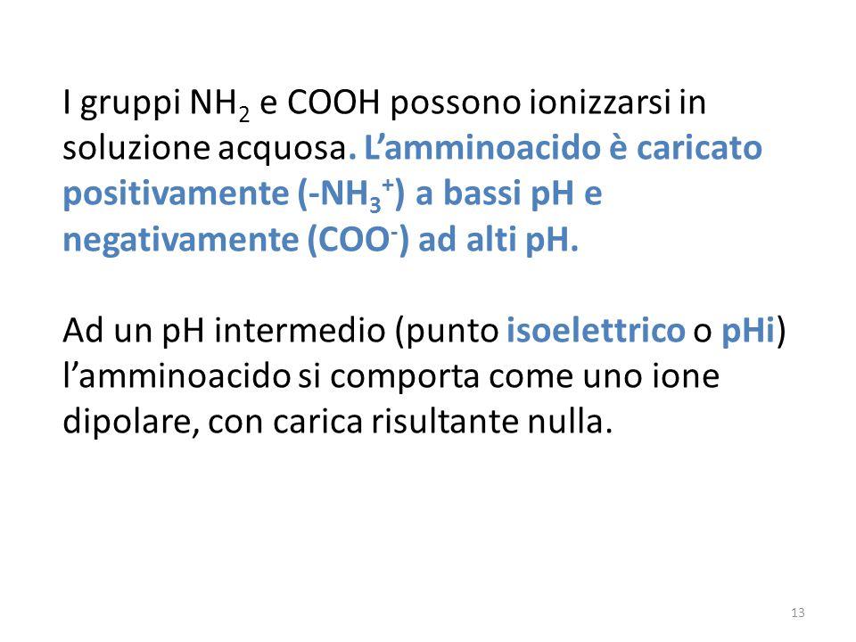 I gruppi NH2 e COOH possono ionizzarsi in soluzione acquosa