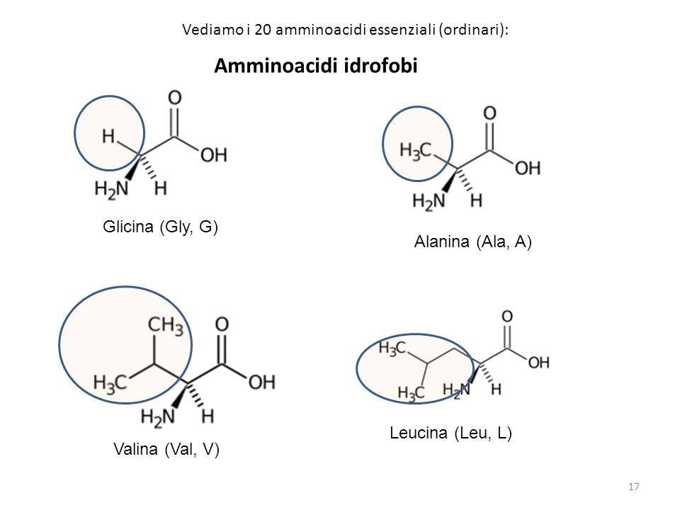 Amminoacidi idrofobi Vediamo i 20 amminoacidi essenziali (ordinari):