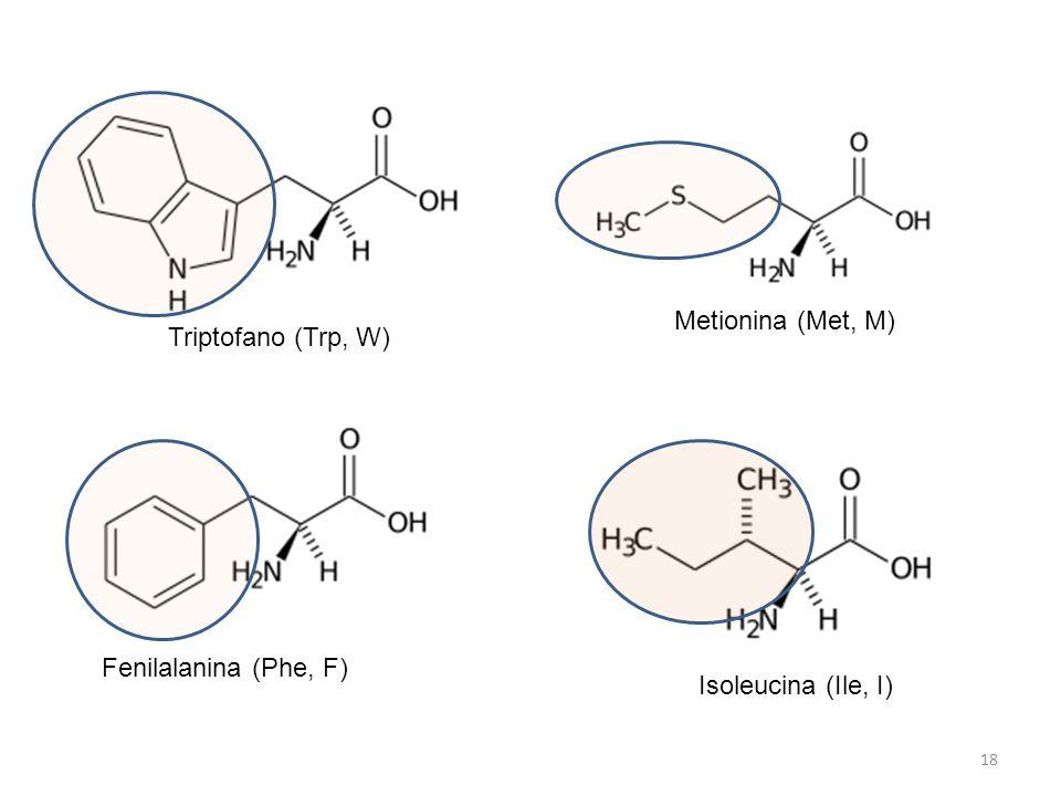 Triptofano (Trp, W) Metionina (Met, M) Fenilalanina (Phe, F) Isoleucina (Ile, I)