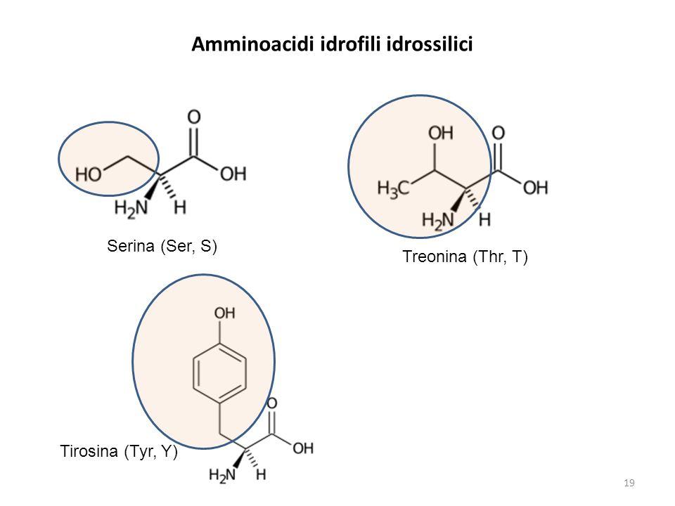 Amminoacidi idrofili idrossilici