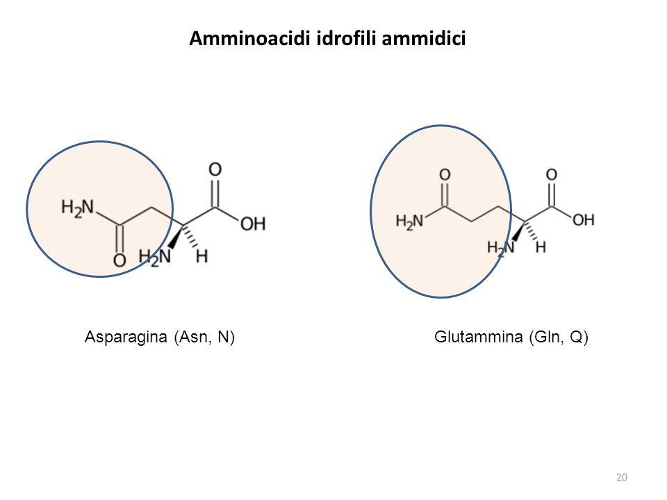 Amminoacidi idrofili ammidici