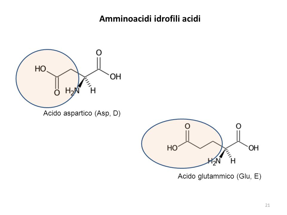 Amminoacidi idrofili acidi