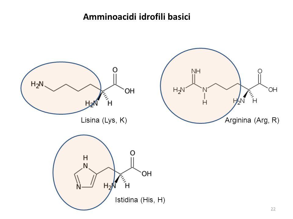 Amminoacidi idrofili basici