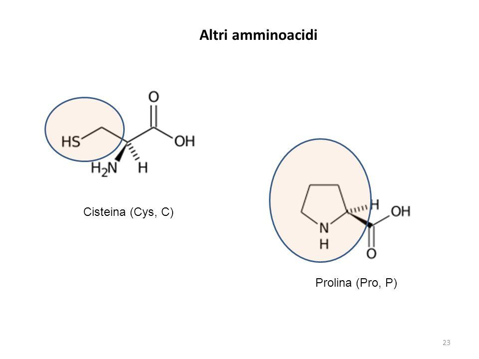Altri amminoacidi Cisteina (Cys, C) Prolina (Pro, P)