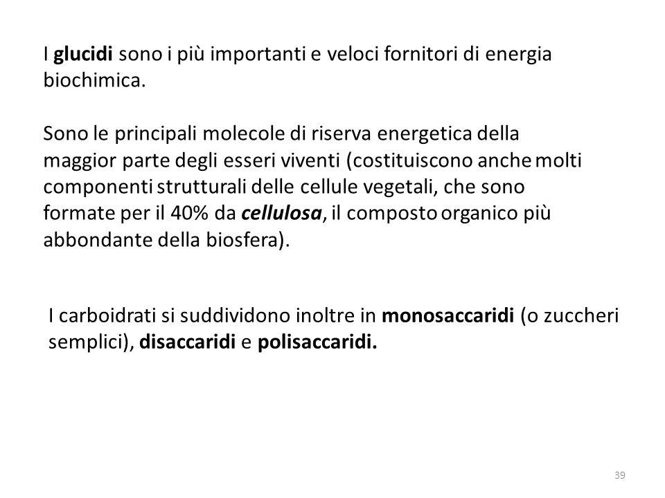 I glucidi sono i più importanti e veloci fornitori di energia biochimica.